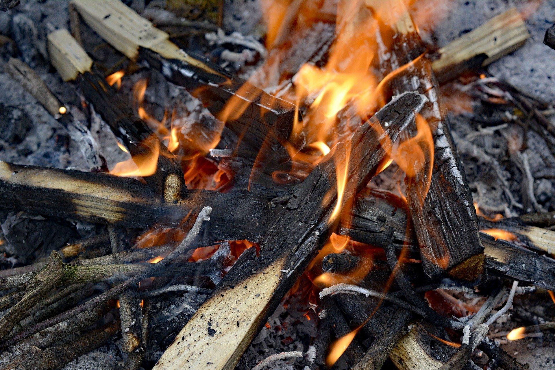 Wild Black Cherry Wood For Smoking