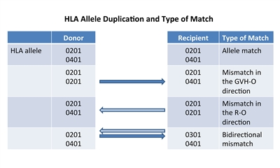 Chart showing HLA allele duplication and type of match between donor and recipient: an allele match (0201 and 0401 for both donor and recipient); a mismatch (0201 for both donor and recipient and 0201 for donor, 0401 for recipient) shown by an arrow pointing in a direction that promotes GVHD (GVH-O); a mismatch (0201 for both donor and recipient and 0401 for donor, 0201 for recipient) shown by an arrow pointing in a direction that promotes rejection (R-O); and a bidirectional mismatch (0201 for donor, 0301 for recipient, and 0401 for both donor and recipient) shown by arrows pointing in two directions, a direction that promotes rejection (R-O) and a direction that promotes GVHD (GVH-O).