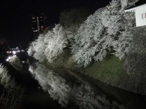 二ノ丸東大手門より南側:霞城公園の夜桜:2012年4月28日