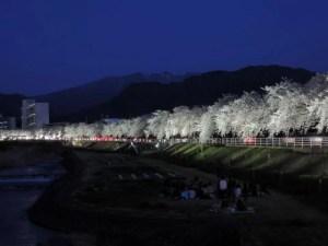 河原では宴会のグループも:山形市、馬見ヶ崎川の桜並木 ー 2012年