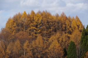 山形県 県民の森から白鷹山に登る - 2014年11月