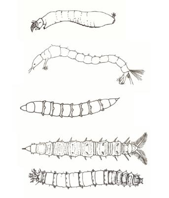 larvas moscas e mosquitos