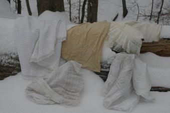 Snowy winter woods...