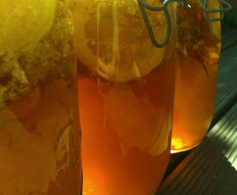Limonade de sureau