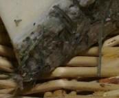 Chèvre au foin, la Sabaco d'Oc