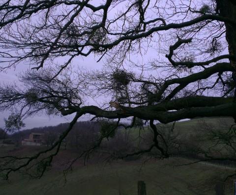 Ferme du Nant et Chêne pédonculé