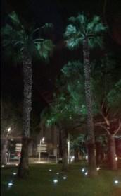 Palmiers et pins