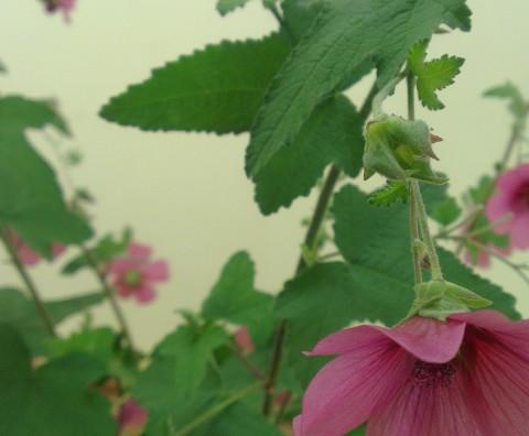 Les fleurs de MarieLou