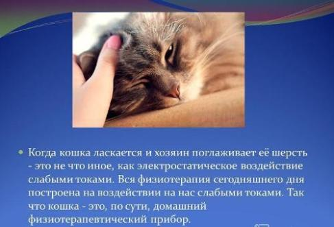 Сколько минут нужно гладить кошку, чтобы избавиться от стресса?