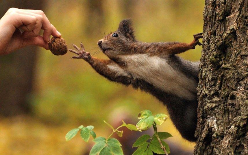 お、おくれよぅ~。 : 可愛すぎる動物たちの寫真45枚 - NAVER まとめ