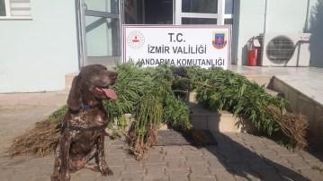 Narkotik köpek timiyle uyuşturucu operasyonu