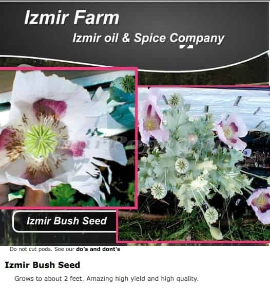 'Izmir Bush' Papaver Somniferum Poppy Seeds – Izmir Farms
