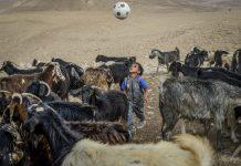 Beduin kisfiú a kecskenyáj közepén focizik a Júdeai sivatagban, Jeruzsálemtől 50 kilométerre keletre 2019 augusztus 24-én - fotó: Bea Bar Kallos