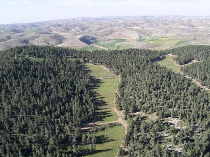 Az erdős területek beépített területekké válnak. Jatir erdő - fotó: KKL-JNF