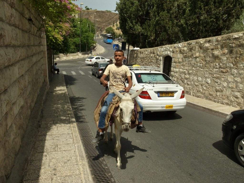 Gecsemáné-kertnél szamaragoló fiú, Jeruzsálem - fotó: Szalai Viktor