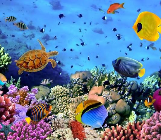 Korallkolónia a Vörös-tengerben - fotó: Shutterstock