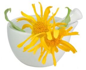 arnika-homeopatija-1