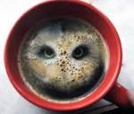 mudra-kava