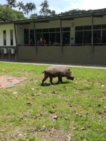 QT Warthog