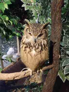 Owl walk :(