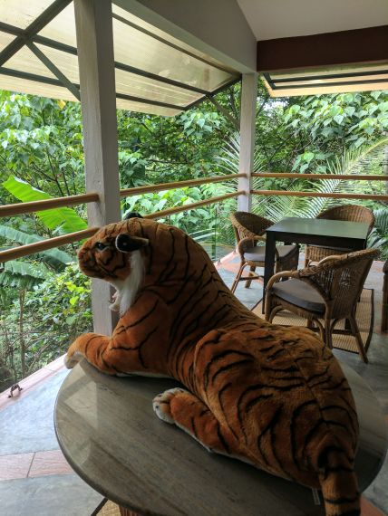 Tiger to scare monkeys at Ambong!