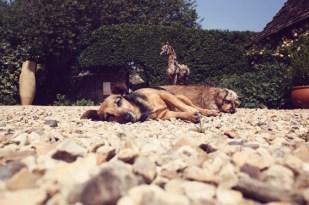 "Puck and Minnie Sunbathing with Heather Jansch's ""Sugar Plum"""