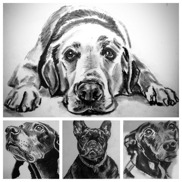 Black and White Pencil Drawings Animals