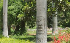 Urama Gardens graffiti