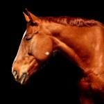 Czym karmić konia, aby był zdrowy