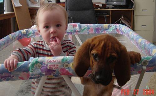 Un bébé chiot est comme un bébé humain