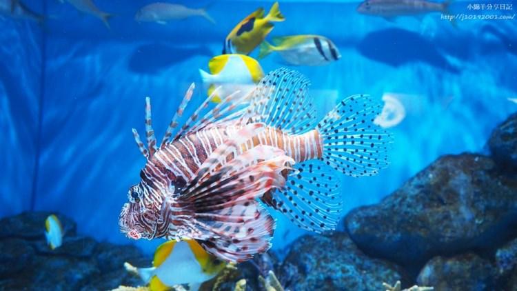 北海道景點︱登別尼克斯海洋公園 尼克斯城水族館