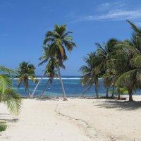 D'ale Caymanului
