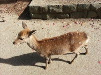 A real bambi!
