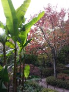 Garden in Nara (2)