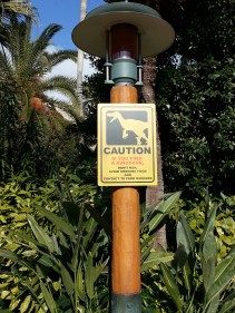 Caution! If you find a dinosaur: don't run, avoid showing food and contact to park rangers