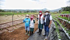 Pemkot Bandung Resmikan Kawasan Pertanian Terpadu 'Sekemala Farming' di Ujungberung