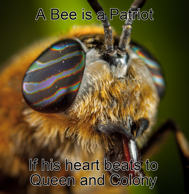 Motivational Bee Poster: A bee is a patriot if his heart beats to queen and colony