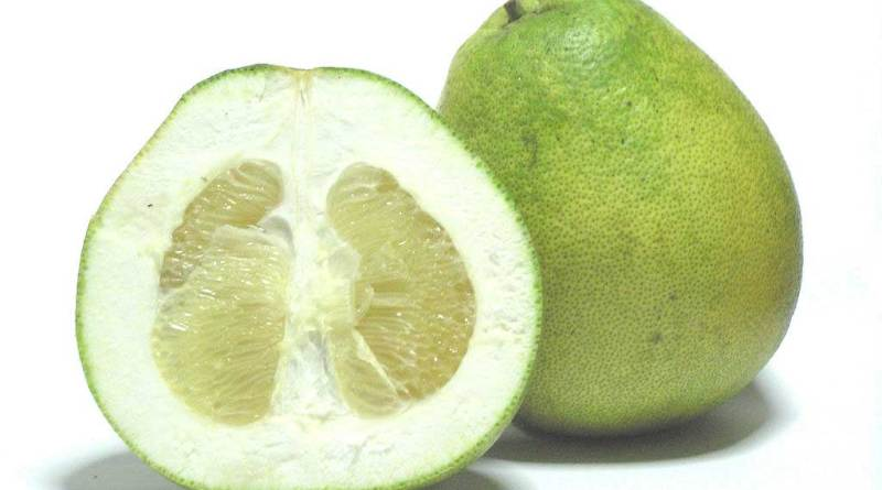 shaddock pomelo citrus maxima pummelo fruit