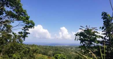 Over 100 Acres Of Prime Development Land Goes FOR SALE In St Ann!