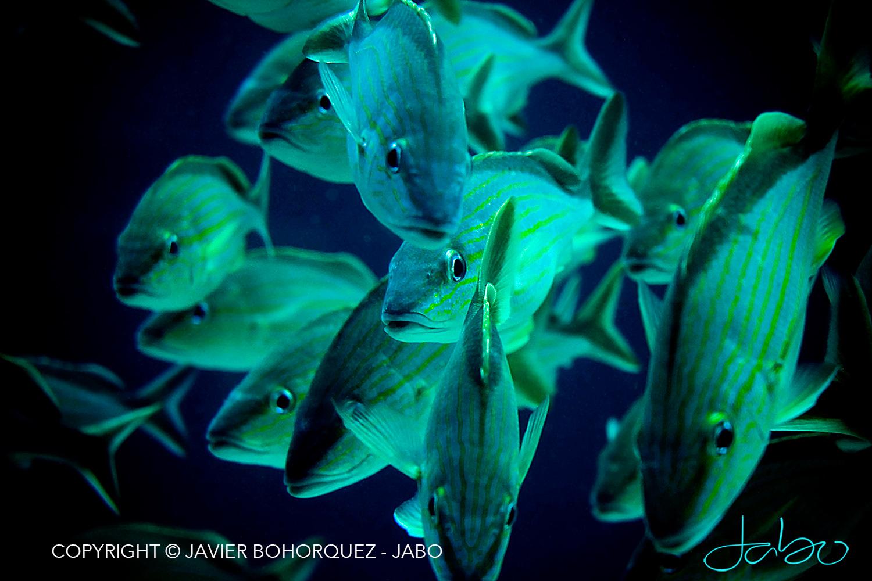 Bahamas Aquarium