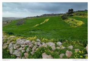 Countryside near Siġġiewi