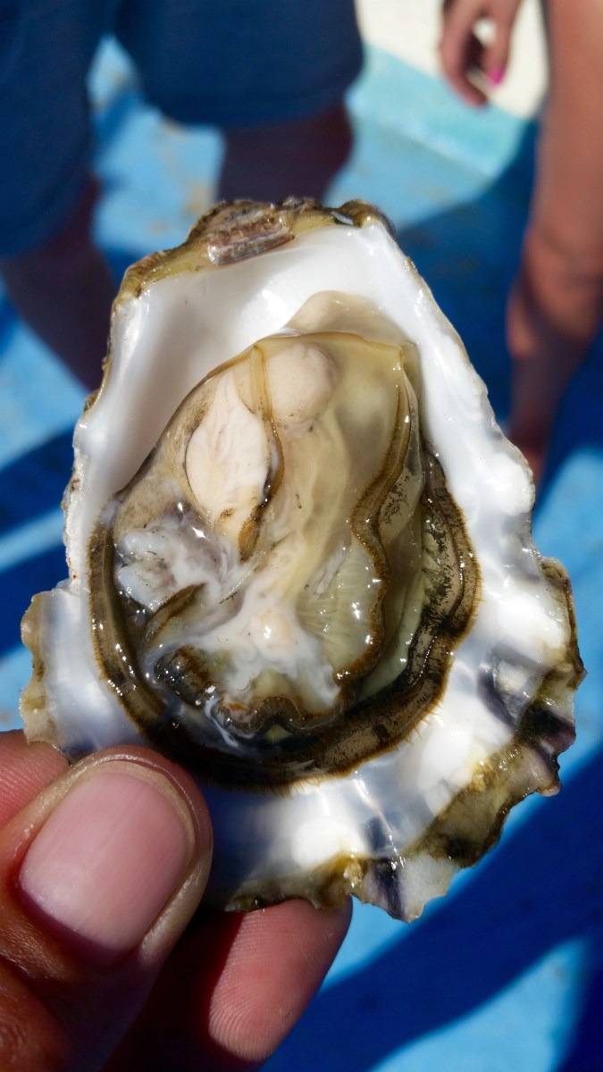 Bouzigues Oysters