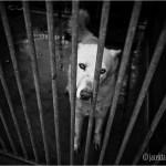 Ewakuacja schroniska dla zwierząt