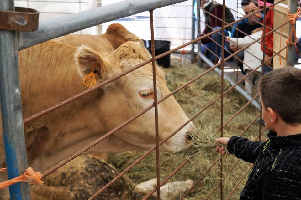 Cuenta atrás para que abra sus puertas la Feria de Otoño de Biescas con una edición de récord