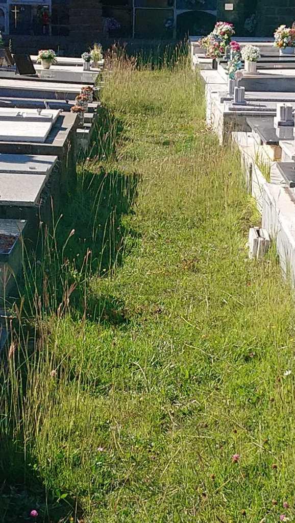 FALTA DE LIMPIEZA Y MANTENIMIENTO. Cementerio de Sabiñánigo. (FOTO: PP)