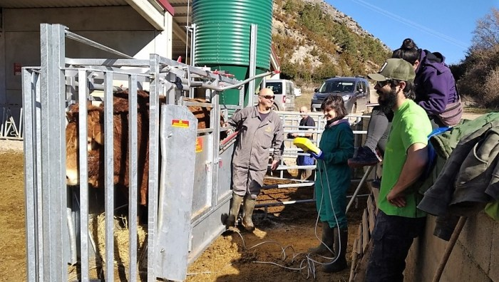OTIBOVIS. Plan para la mejora de la productividad en las explotaciones de bovino de La Jacetania. (FOTO: Gobierno de Aragón)