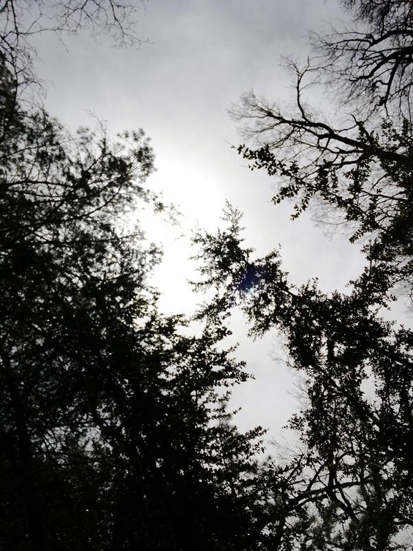 BAÑOS DE BOSQUE. La Tierra de Biescas es un lugar ideal para paracticar shinrin-yoku.
