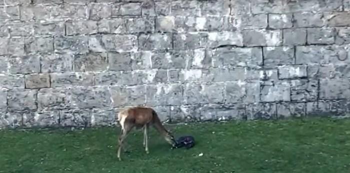 CIUDADELA. Pincha en la imagen para acceder al vídeo del nuevo nacimiento en la Ciudadela de Jaca. (IMÁGENES: Jara Mur)