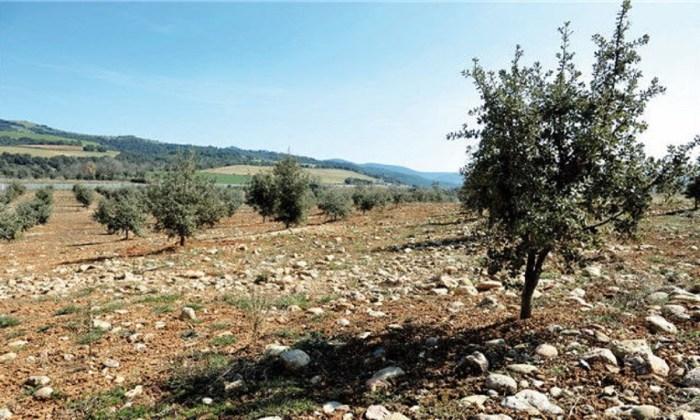 Plantación de trufa en Huesca. (FOTO: DPH)