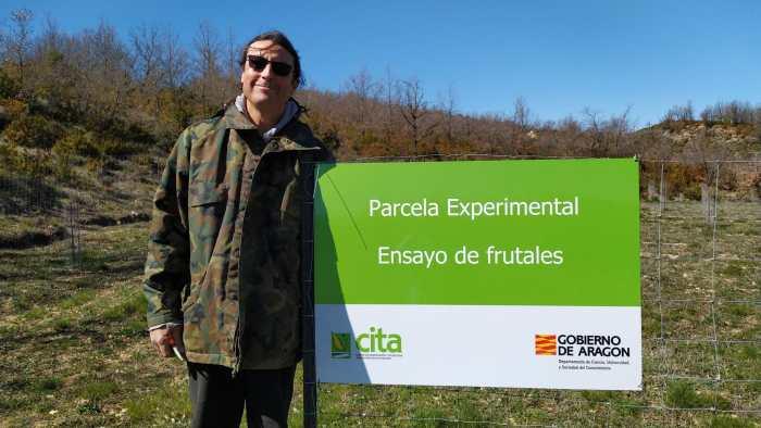 Nace una singular iniciativa para apadrinar los manzanos de la repoblación de Artosilla. En la imagen, Chulio Romero, en la plantación. (FOTO: Rebeca Ruiz)